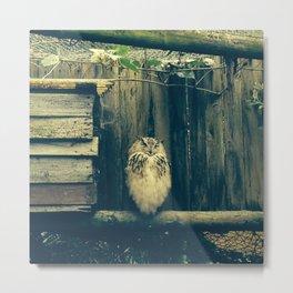 Smily owl Metal Print