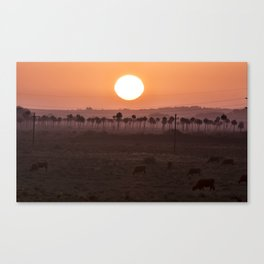 Sunset in the palm trees Canvas Print
