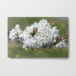 the smell of spring -4- Metal Print