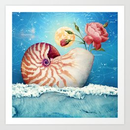 Collage Collection :: Fancy Nautilus Shell Art Print