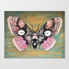 Owl Moth Canvas Print