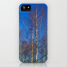 Silver Birch Trees in Winter Sunlight iPhone Case