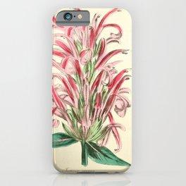 Flower justicia carnea18 iPhone Case