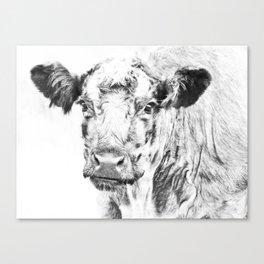 Ardnamurchan Coo Canvas Print