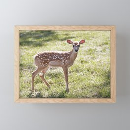 Fallow Deer Fawn 2 Framed Mini Art Print