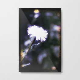 Blue Daisy Metal Print