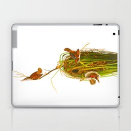 Marsh Wren Laptop & iPad Skin