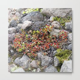 Watercolor Flower, Dwarf Willow 01, Northern Iceland Metal Print