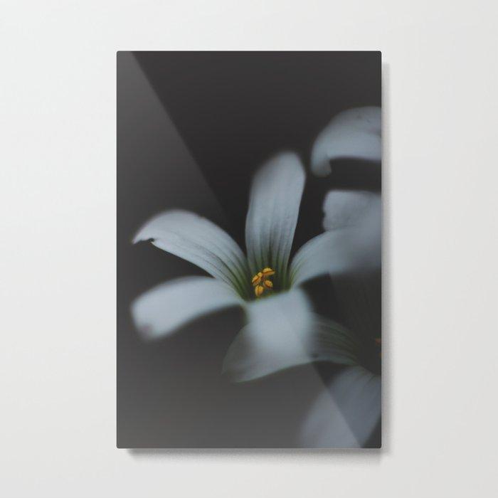 Detailed flower Metal Print