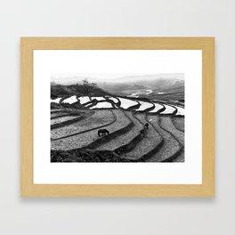 Horses on rice paddies in northern Vietnam Framed Art Print