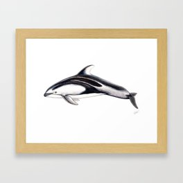 Pacific white-sided dolphin Framed Art Print