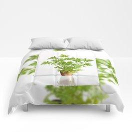 Pelargonium citrosum plant Comforters