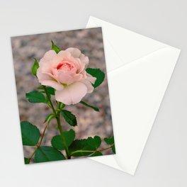 blush rose Stationery Cards
