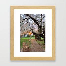 Blossoms & Benches Framed Art Print