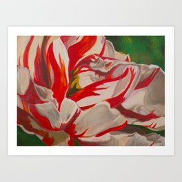 Red and White Striped Tulip Art Print
