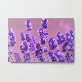 Romantic field Metal Print