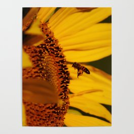 Best little pollinator Poster