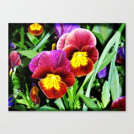 Pansy party Canvas Print