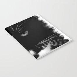 SWEETY PIE Notebook