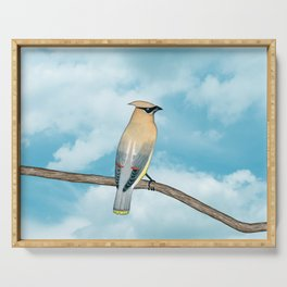 cedar waxwing and blue sky Serving Tray