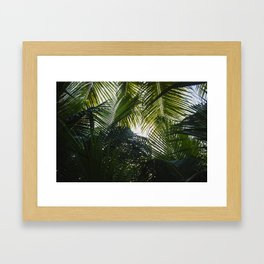 Palm Canopy Framed Art Print