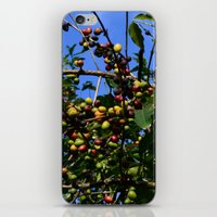 cafe iPhone & iPod Skins featuring Cafe by Camaracraft