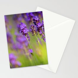Textured background of lavender flowers Stationery Cards