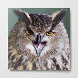 owl sass Metal Print