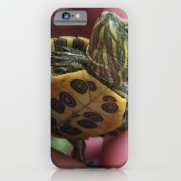 Baby red-eared slider turtle iPhone Case