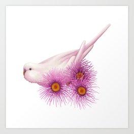 White Budgerigar Art Print