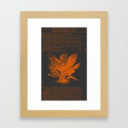 Banana Plant Illustration Framed Art Print