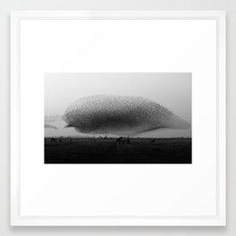 monster of starlings rolling in  Framed Art Print