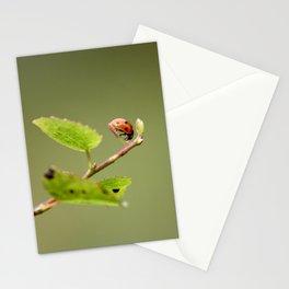 Ladybug Macrosphere Stationery Cards
