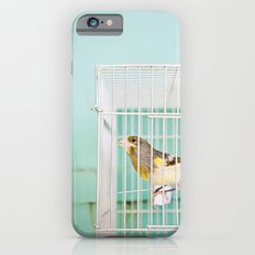 Finch against Turquoise Wall, Jerusalem Slim Case iPhone 6s