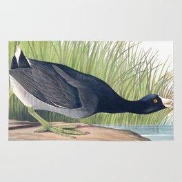 American Coot Vintage Bird Illustration Rug