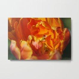 Parrot Tulip by Mandy Ramsey Metal Print