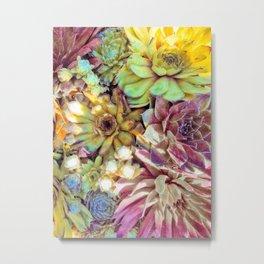 Bright Garden Succulents Metal Print