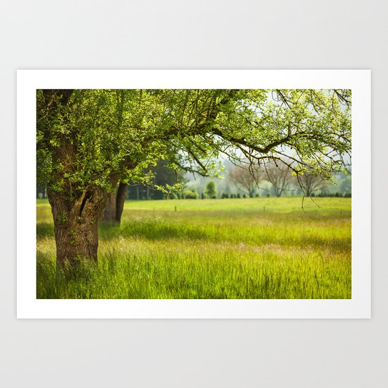 Sunlight over the meadow Art Print