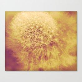 Dandelion Canvas Print