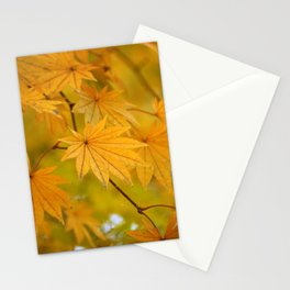 Colorful Japanese Maple In Fall Photography Stationery Cards