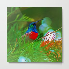 Hummingbird with iridescent colours Metal Print