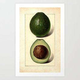 Vintage Botanical Avocado Art Print