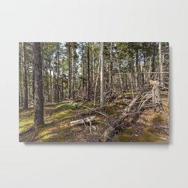 acadian woods Metal Print