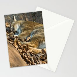 Sleeping Mountain Lion Stationery Cards
