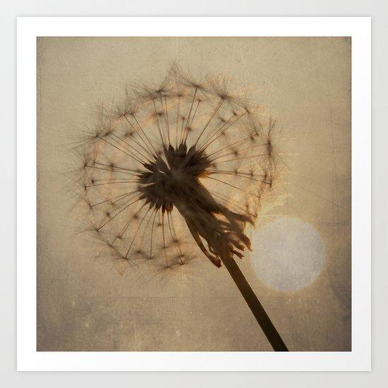 Dandelion Clock and Setting Sun Art Print