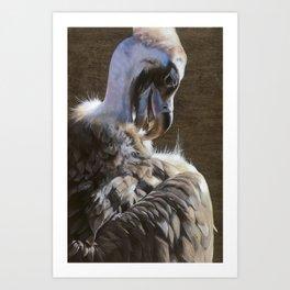 Cinereous Vulture Art Print