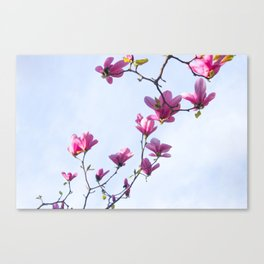 Inflorescence Canvas Print