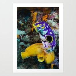 Sea squirts Lounging about Art Print