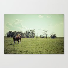 ...my life is like that... Canvas Print