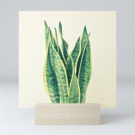 Snake Plant Mini Art Print